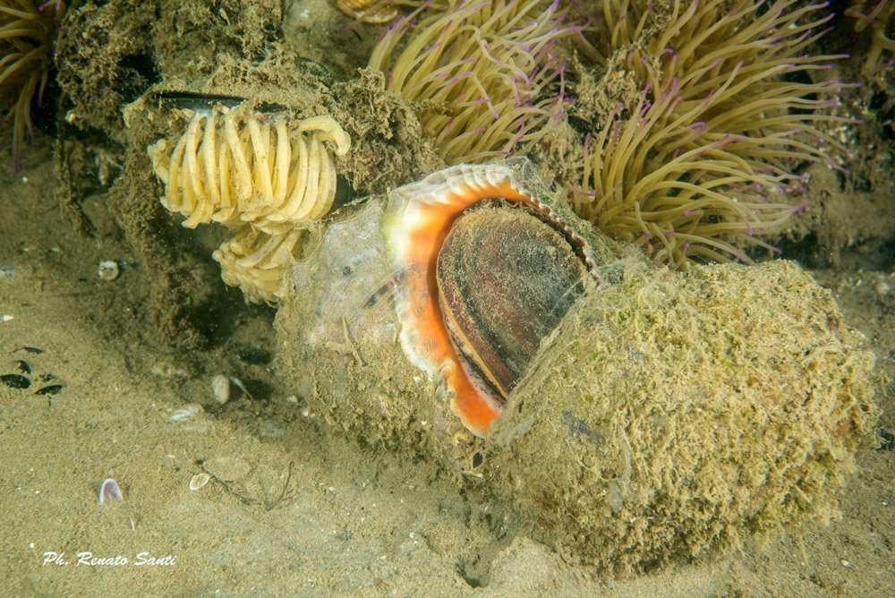 Spiaggia 54 Riccione - anemone-e-conchiglia