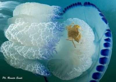Spiaggia 54 Riccione - Medusa con granchio