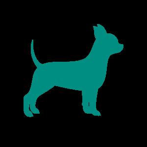 area per cani in spiaggia